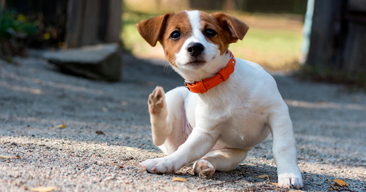 Does My Pet Need Year-Round Flea and Tick Prevention In Orlando Yes, and Here's Why!