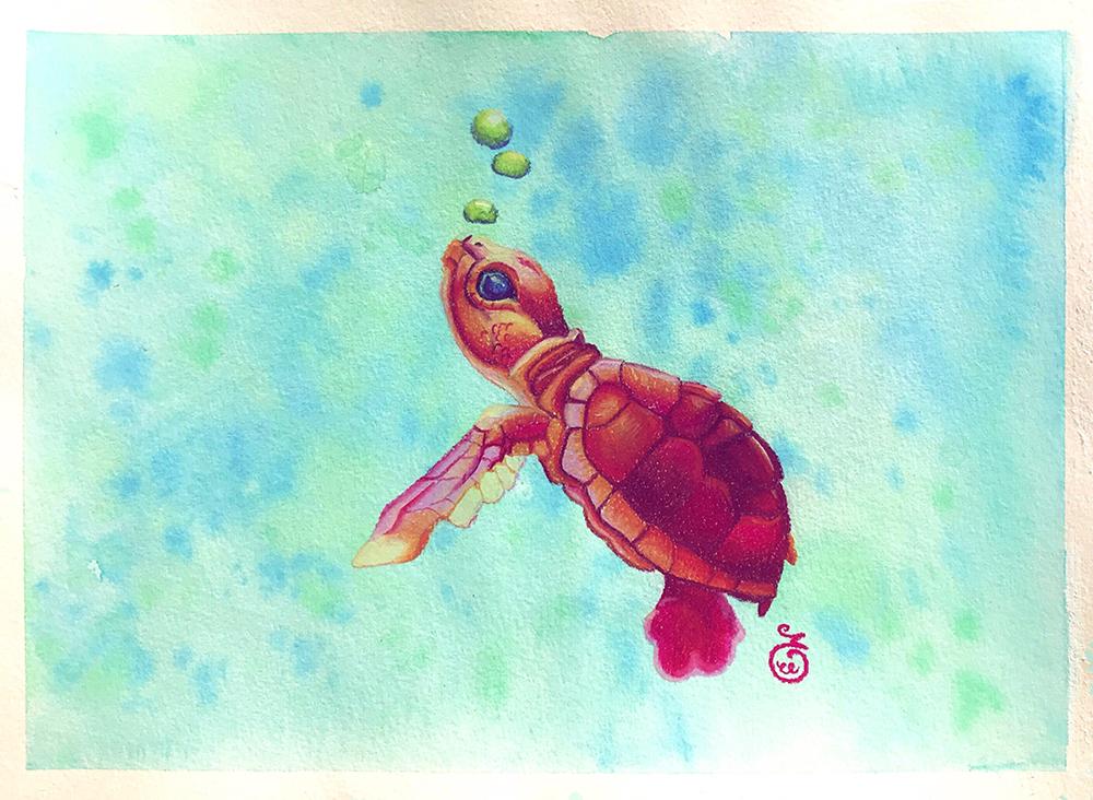 pastel sec illustration tortue