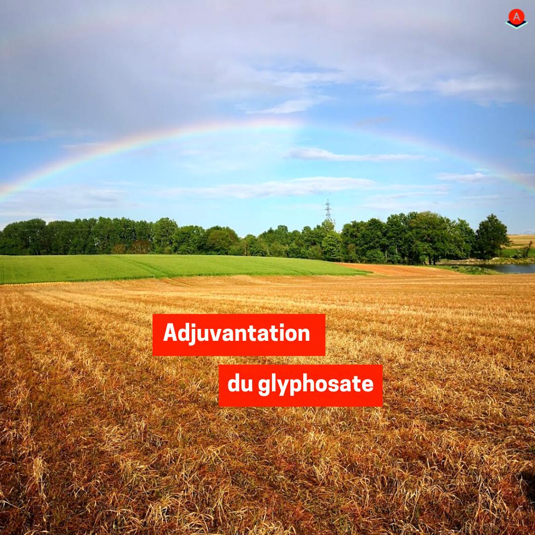 Adjuvantation du glyphosate