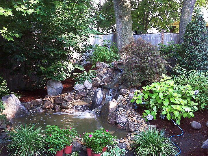 new england landscaper Watertown, MA koi pond, waterfall, plantings, irrigation, landscape lighting