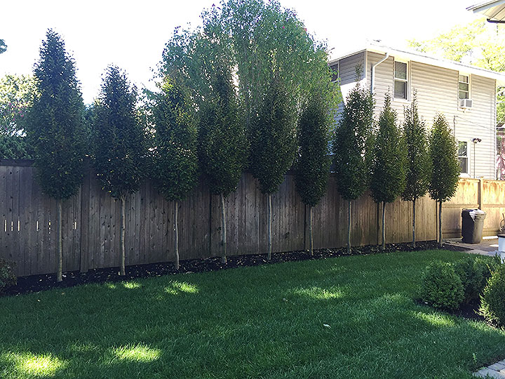 new england landscaper North Reading, MA plantings
