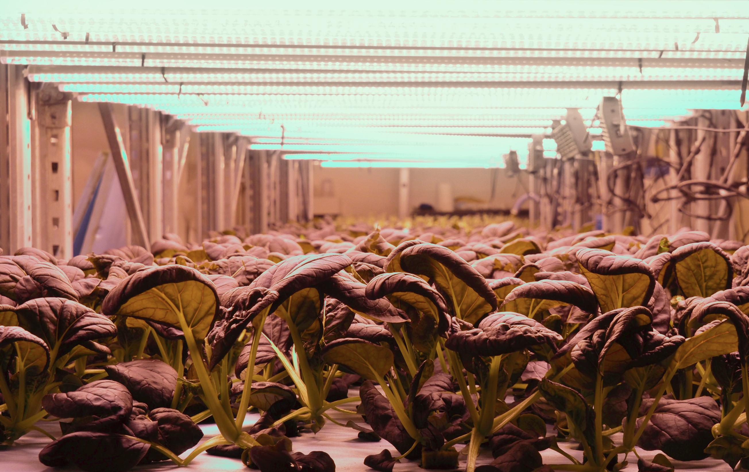 Vertikal odling