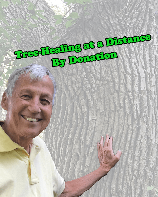 The Tree Whisperer's Tree Healing at a Distance