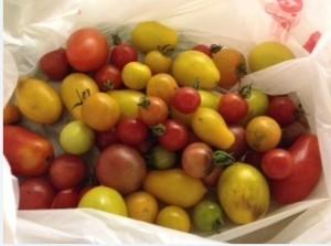 Heirloom tomatoes, Florida