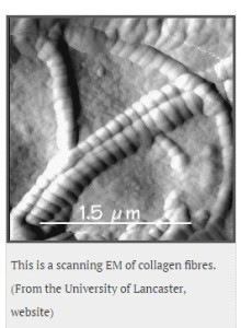 Collagen fibers, University of Lancaster