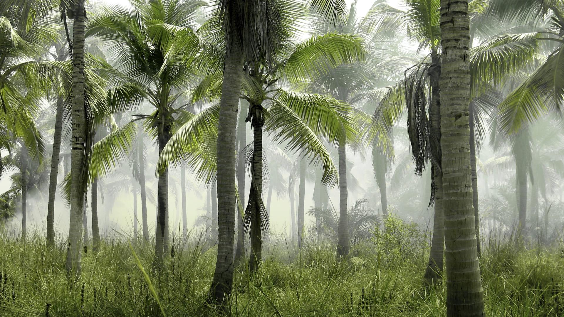 contraste paris jungle