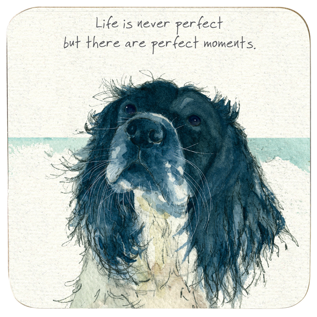 Springer Spaniel Coaster – Moment