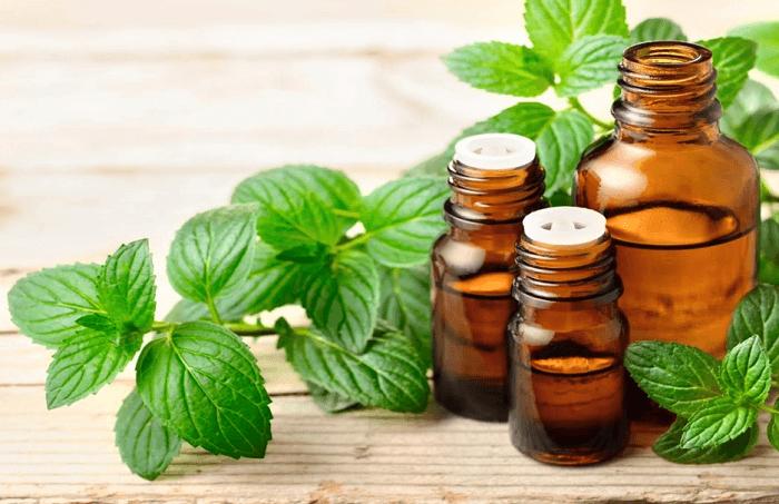 Với hương thơm thơm mát và những công dụng tuyệt vời, tinh dầu bạc hà được sử dụng rộng rãi trong đời sống