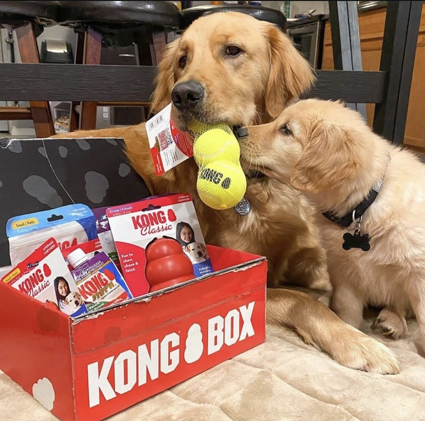 these cute dogs with their KONG box know exactly what a brand ambassador does