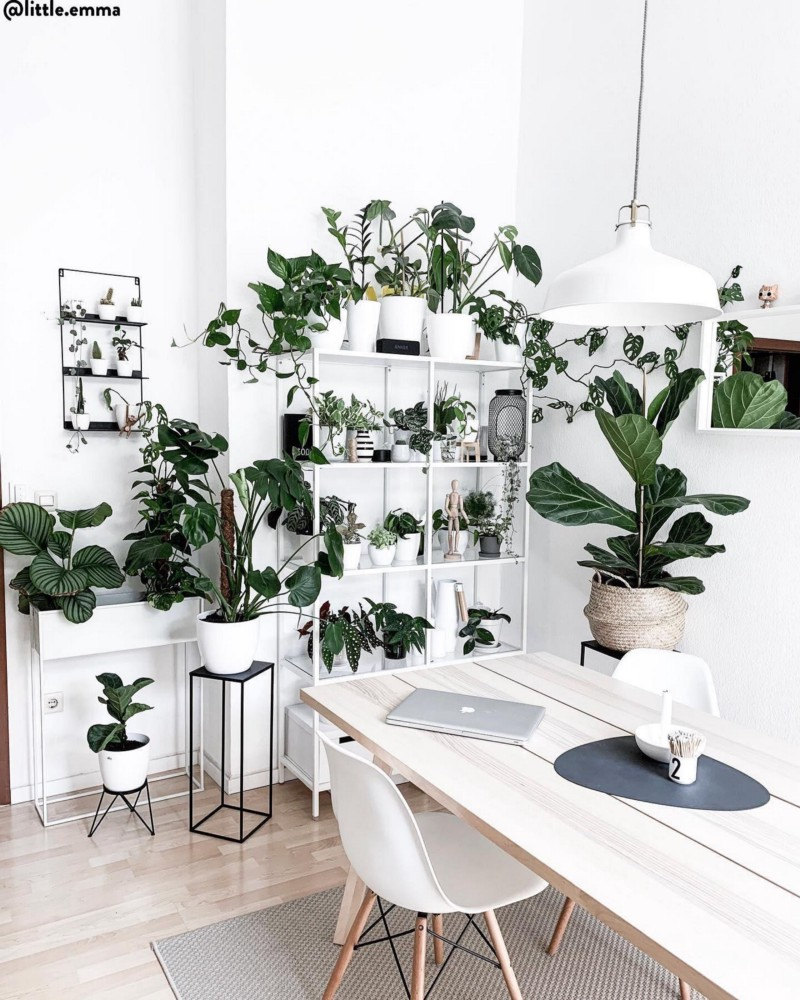 Home office filled with plants
