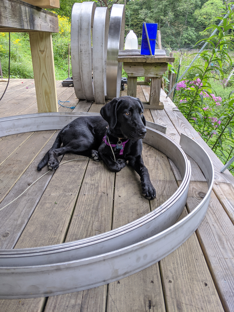 Young black dog sitting in metal hoops on a wood porch.