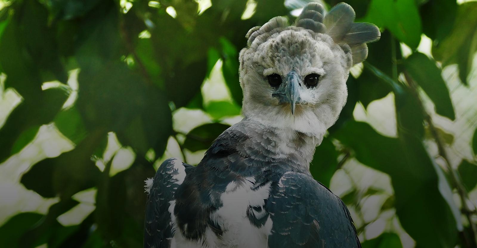 Guyana A Birding Adventure with James Currie