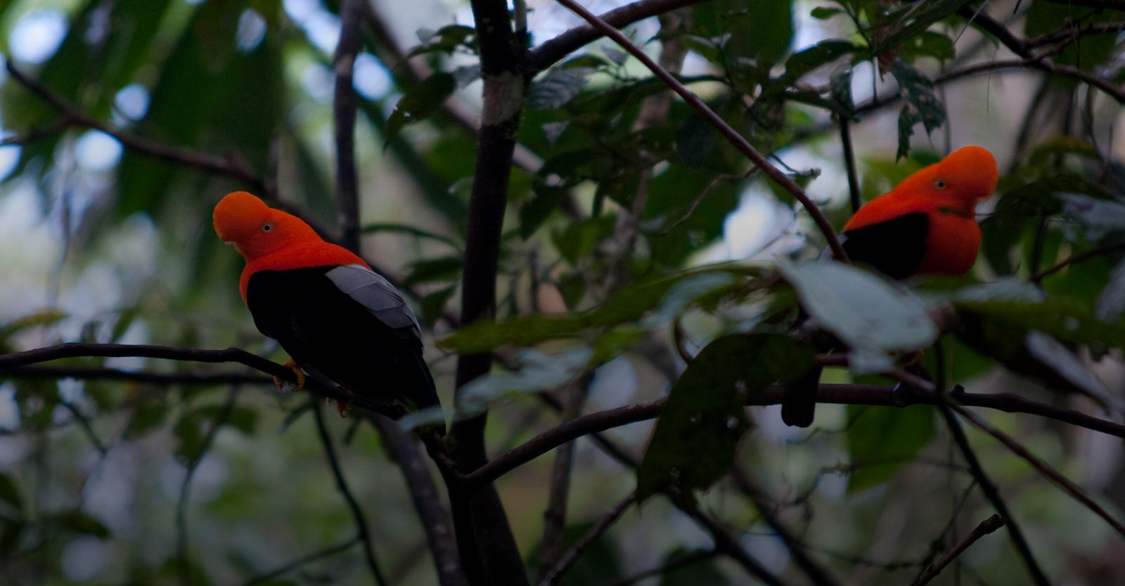 Wings of Peru