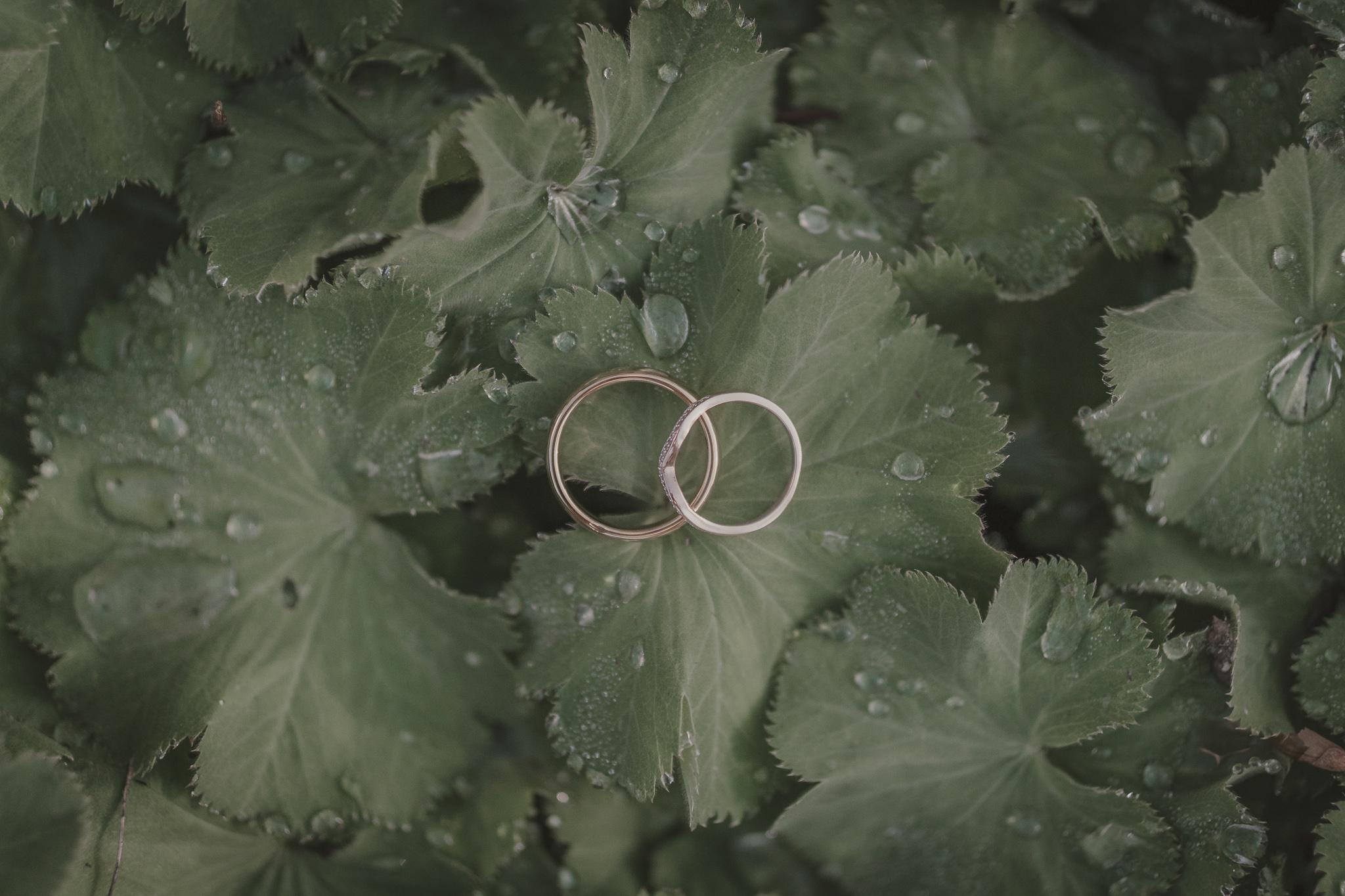 Two rings on leaves
