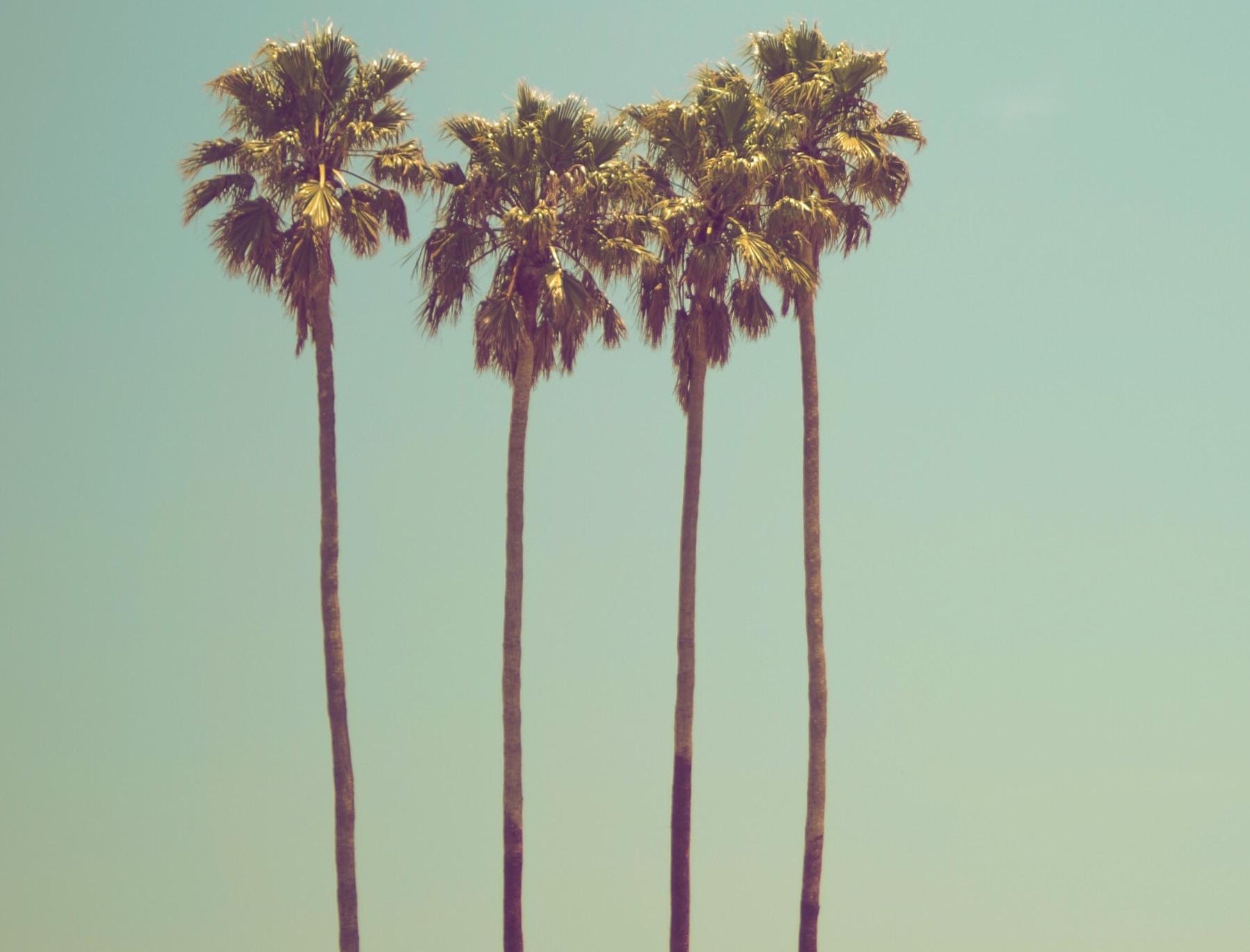 3 Tree / California