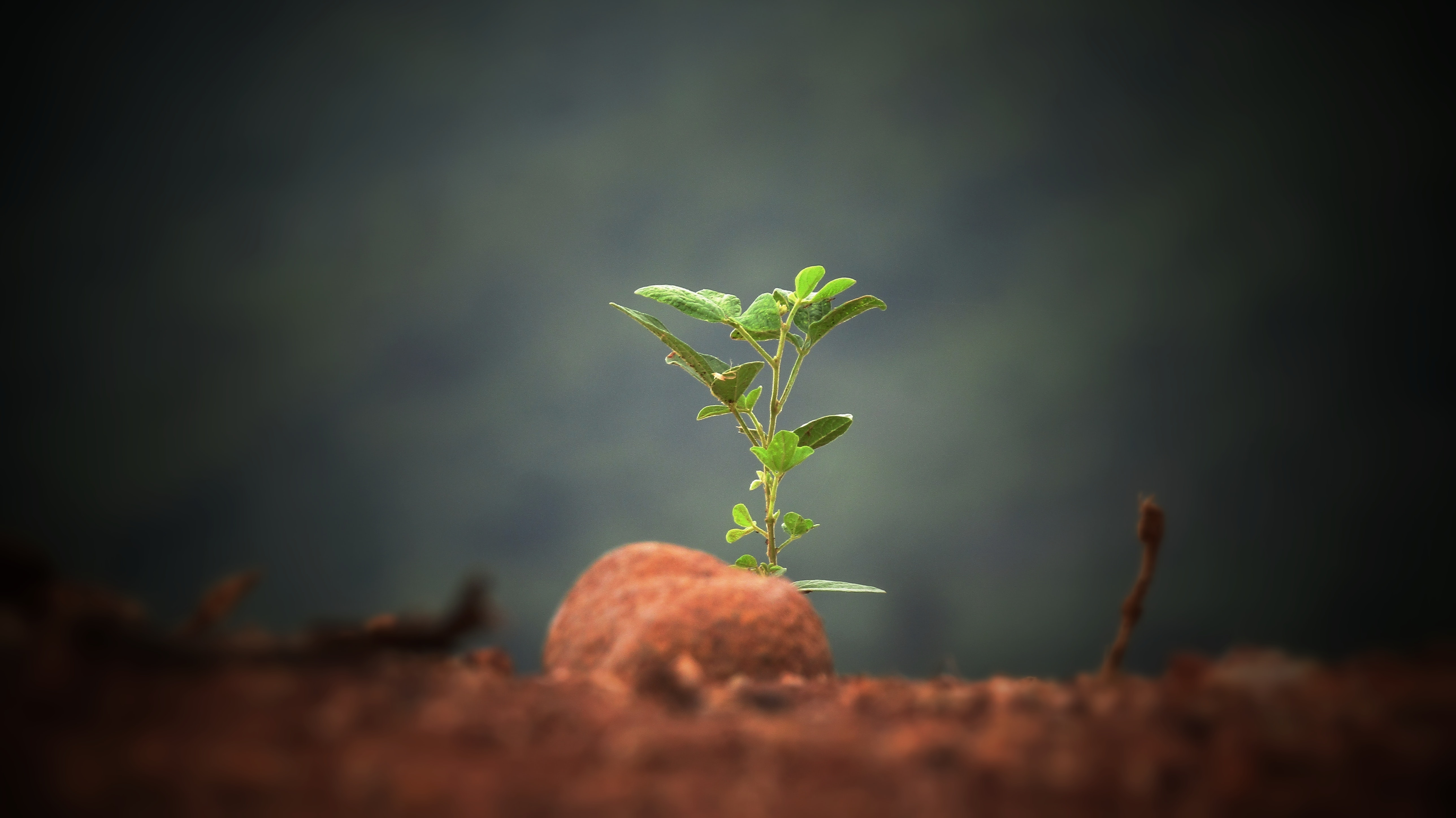New Sprout Photo by Sushobhan Badhai on Unsplash
