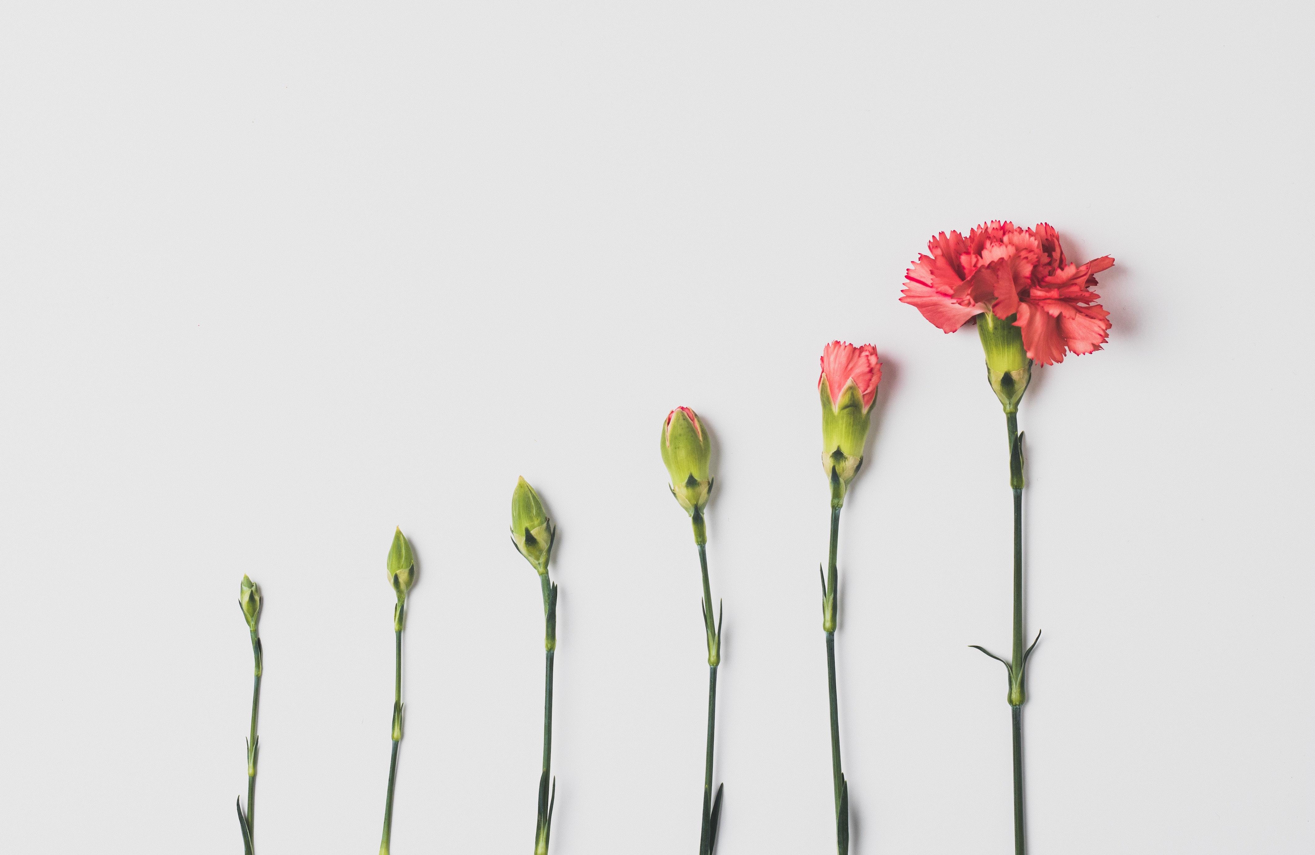 flower progression