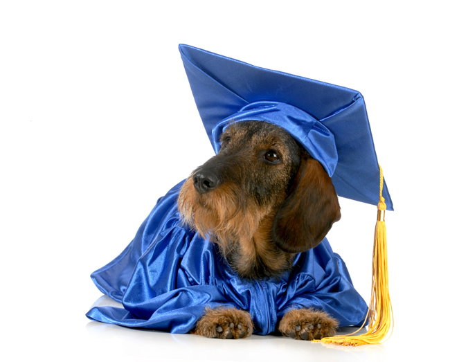 A humorous picture of a dog wearing a cap and gown to illustrate learning.