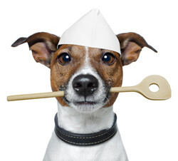 A cute dog posed holding a wooden spoon in his mouth. He is ready to make his own dog food.