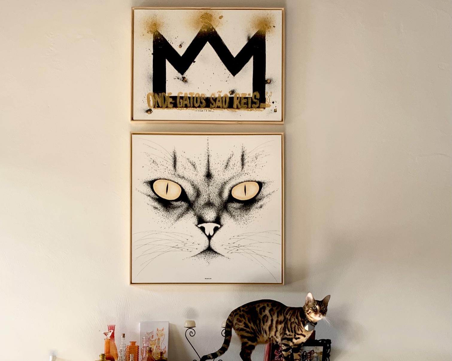 onde gatos são reis