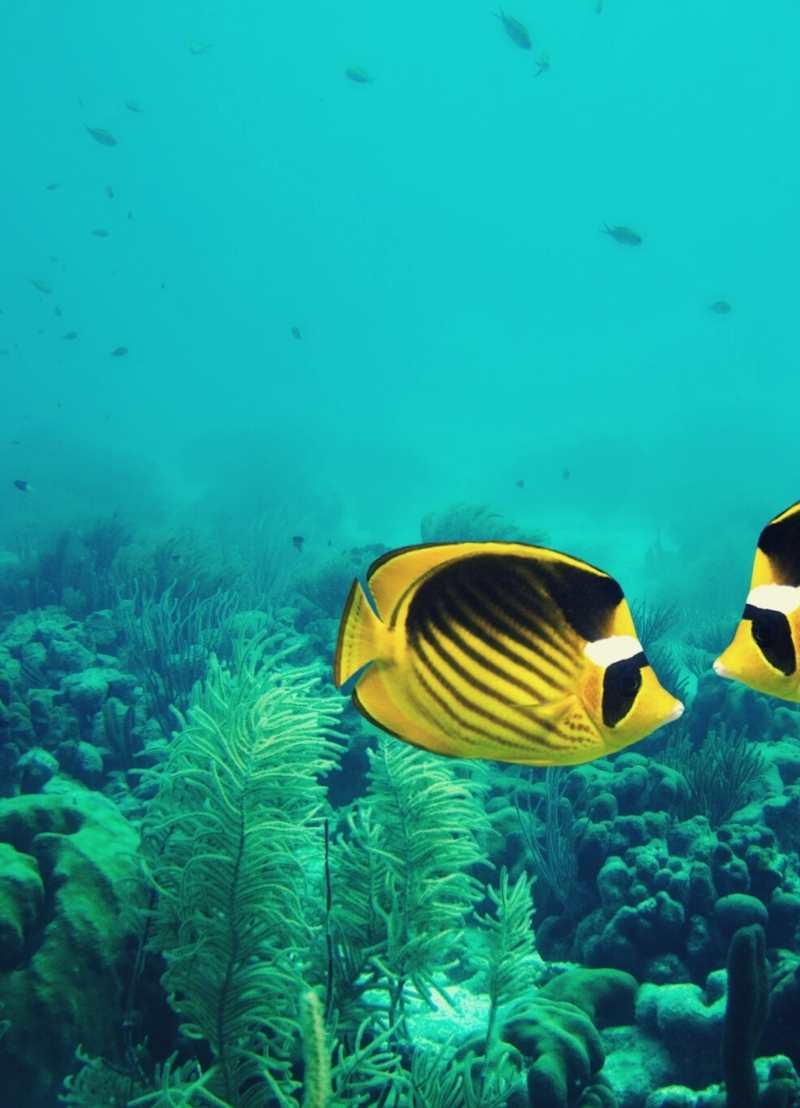 Zwemmen er in 2048 geen vissen meer in de oceaan?