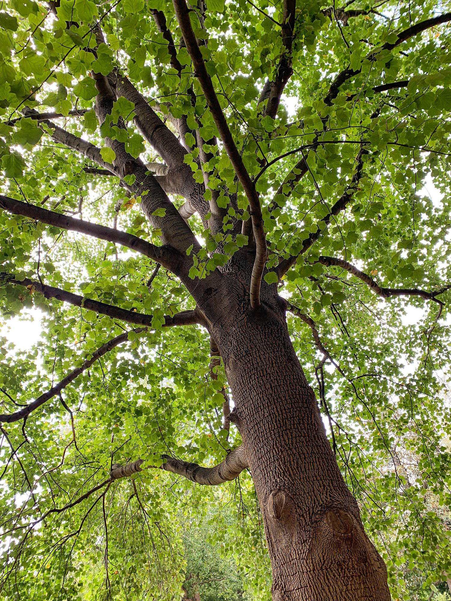 Beautiful Virginia Tree
