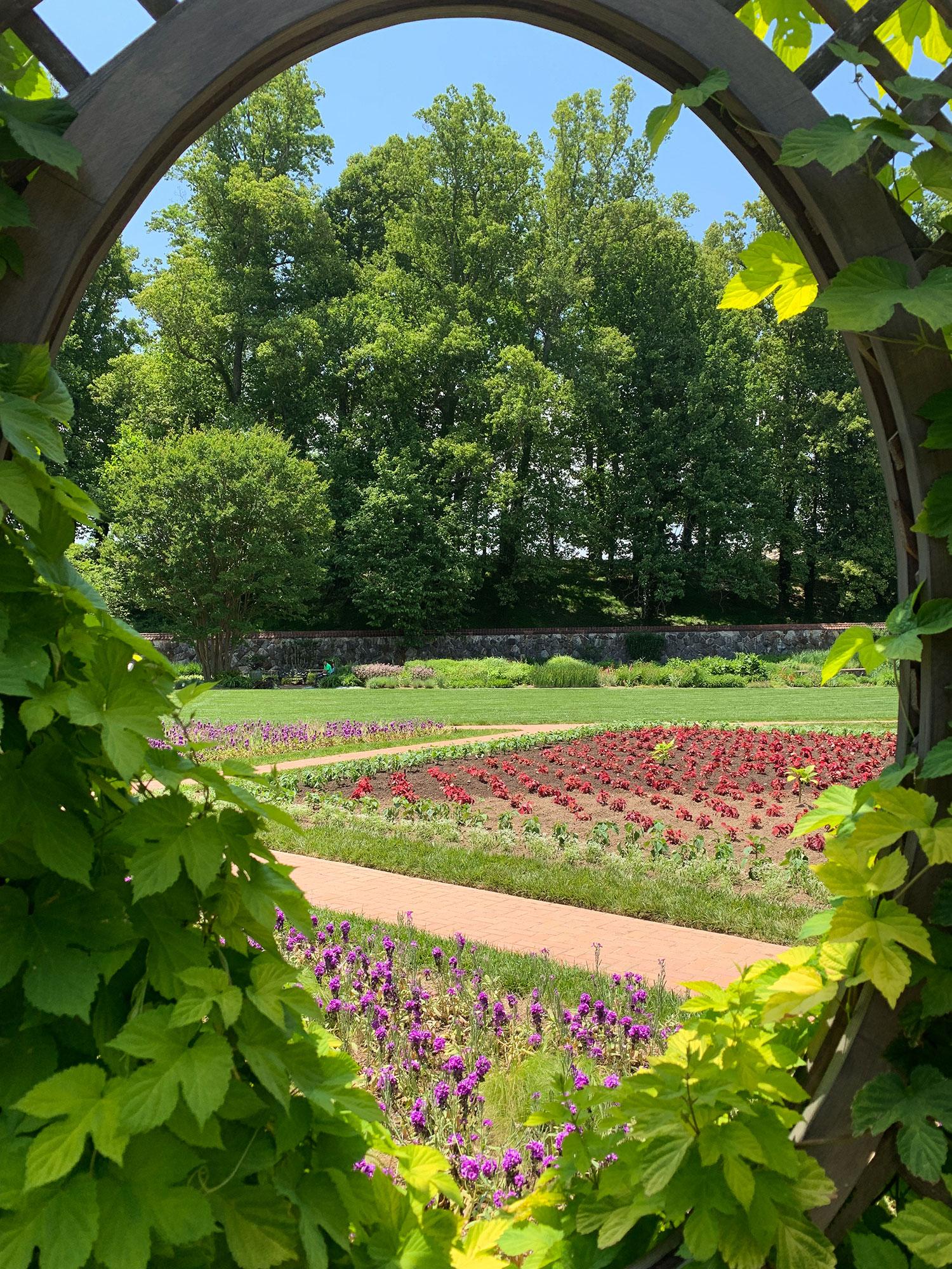 Biltmore Gardens Seen Through Trellis