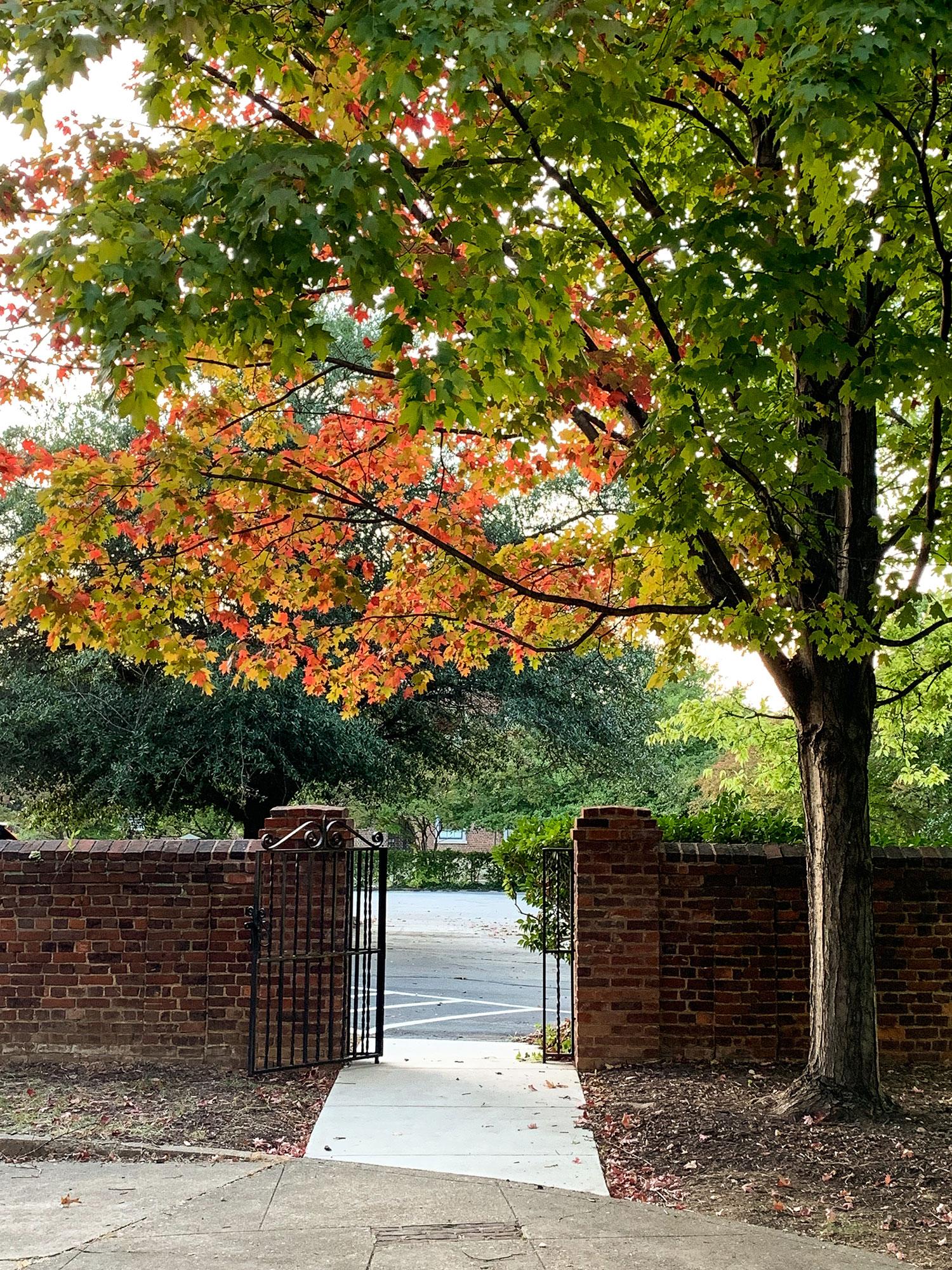 Fall Tree Gate