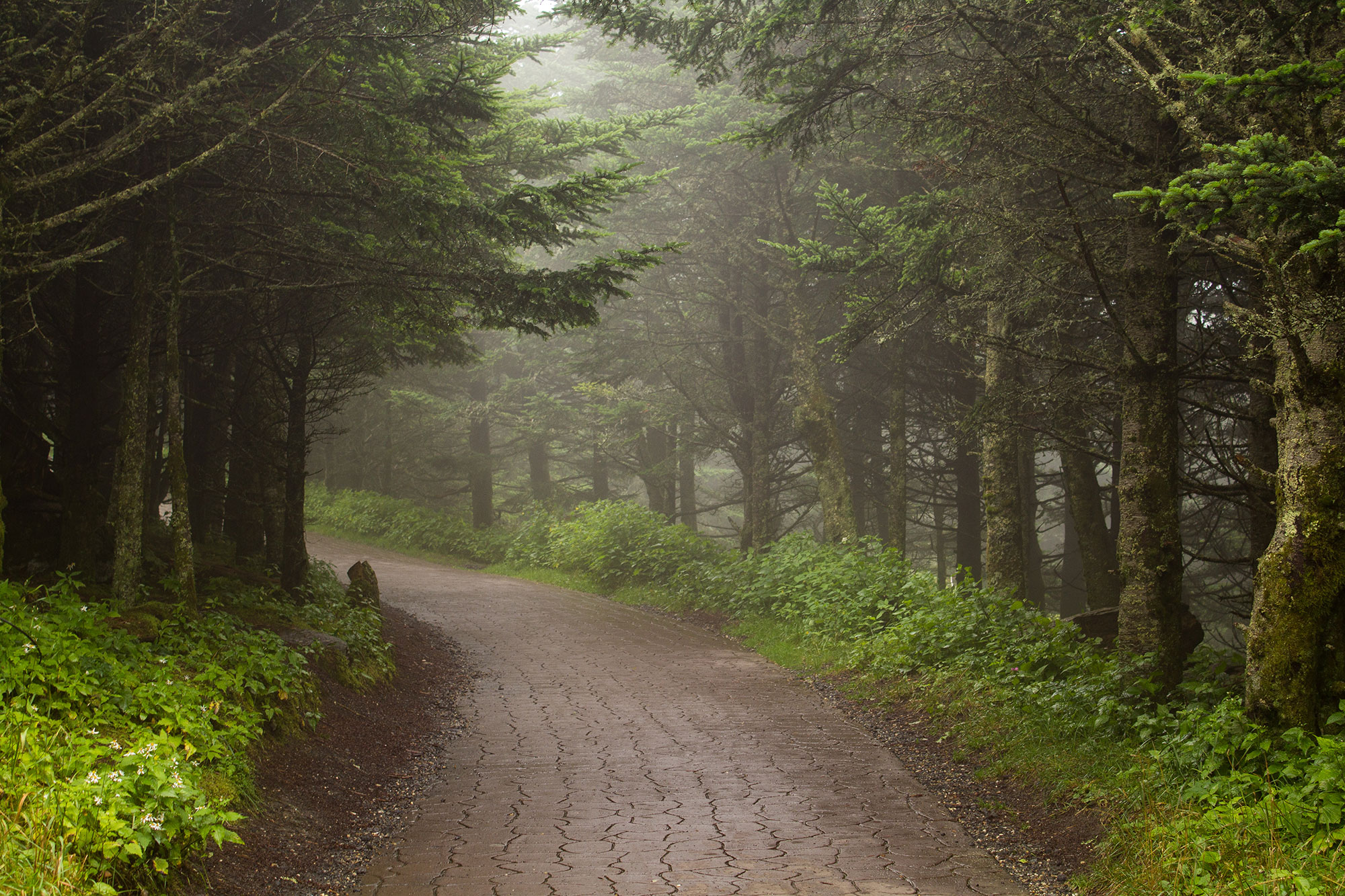 Path to Mt. Mitchell