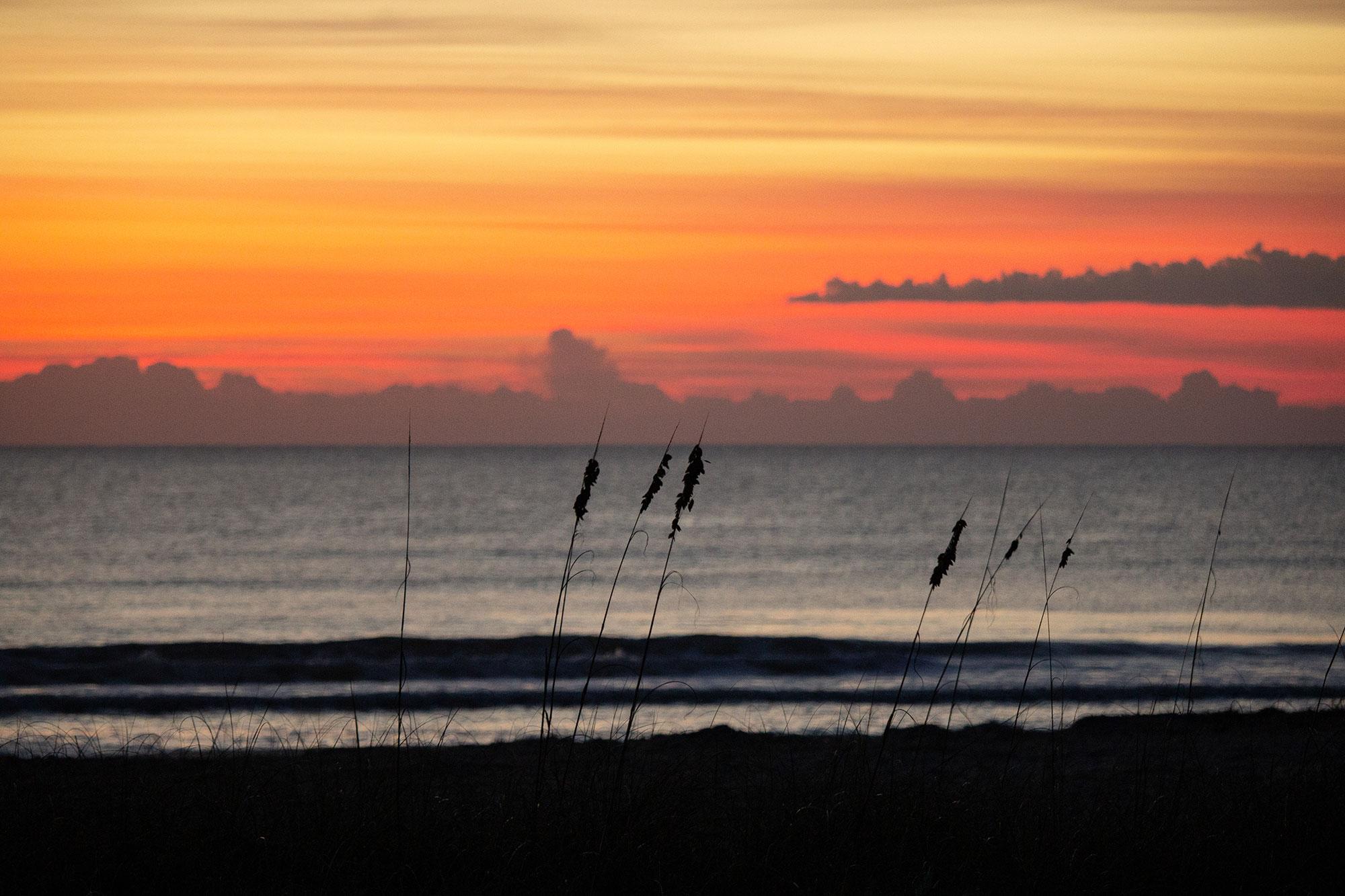 Sea Grass Sillhouette