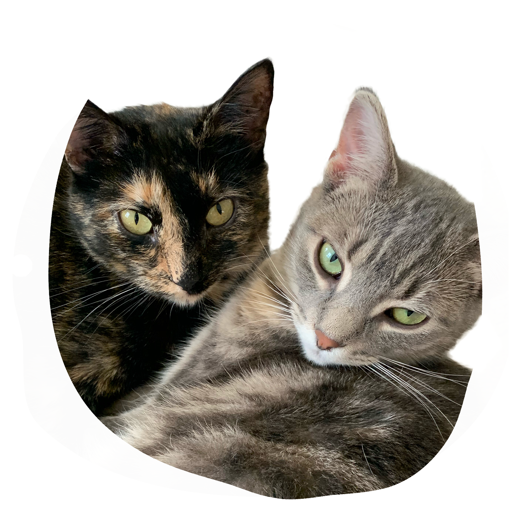 A round, organic splotch shape in off-white, featuring a photograph of two cats. One is gray and beige striped and the other is a black and orange tortoiseshell. They are snuggling.