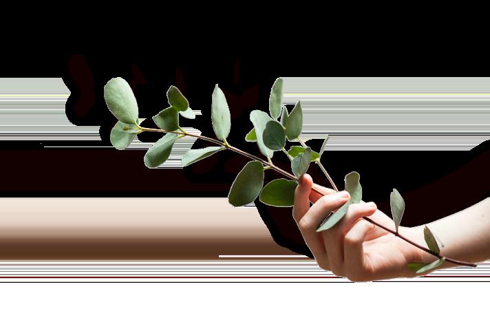 main tenant une plante