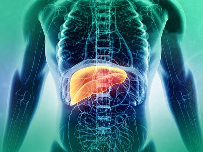 Hepatitis B in the liver
