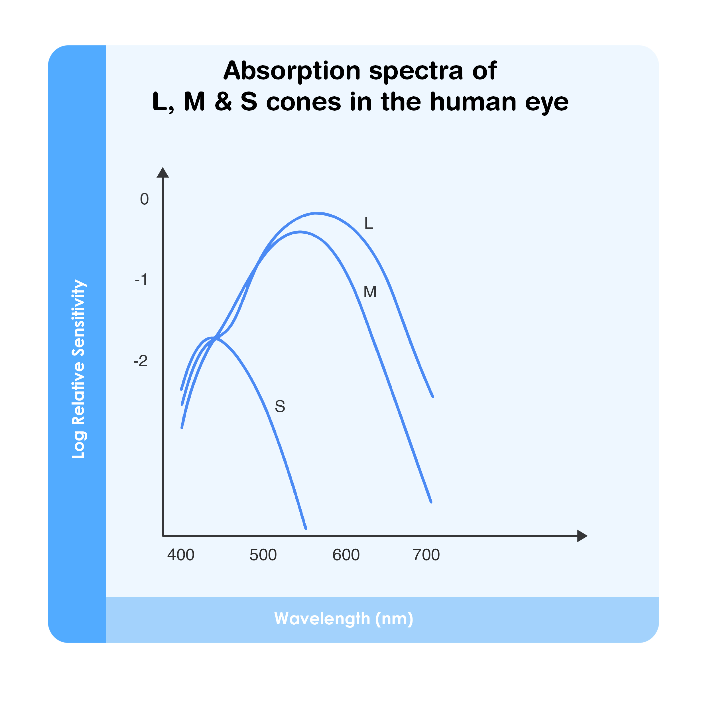 Absorption spectra of L, M & S cones in the human eye