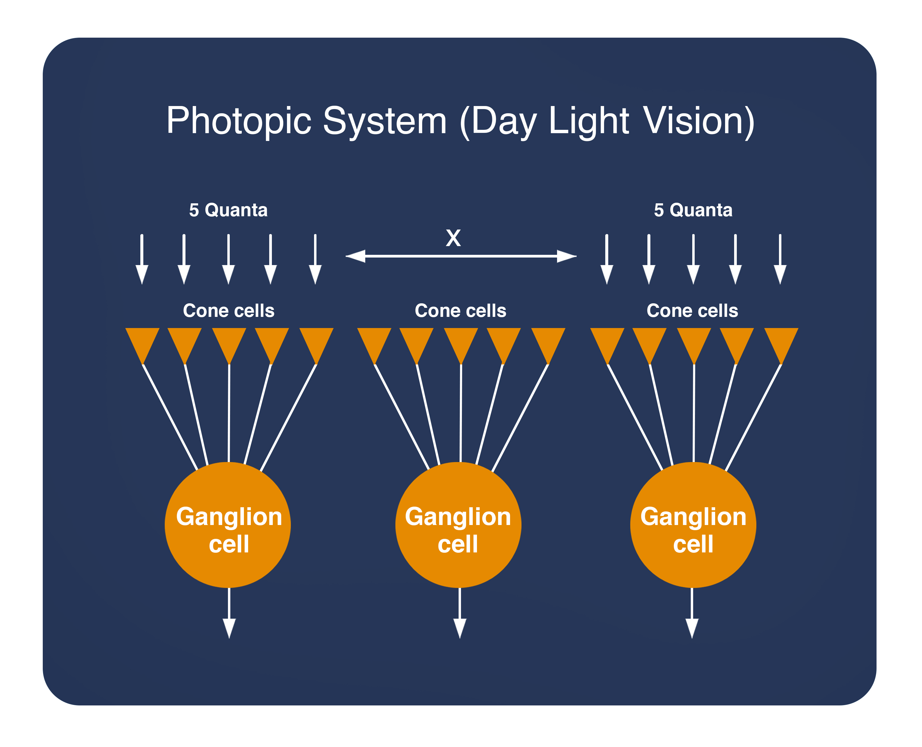 Photopic System (Day Light Vision)