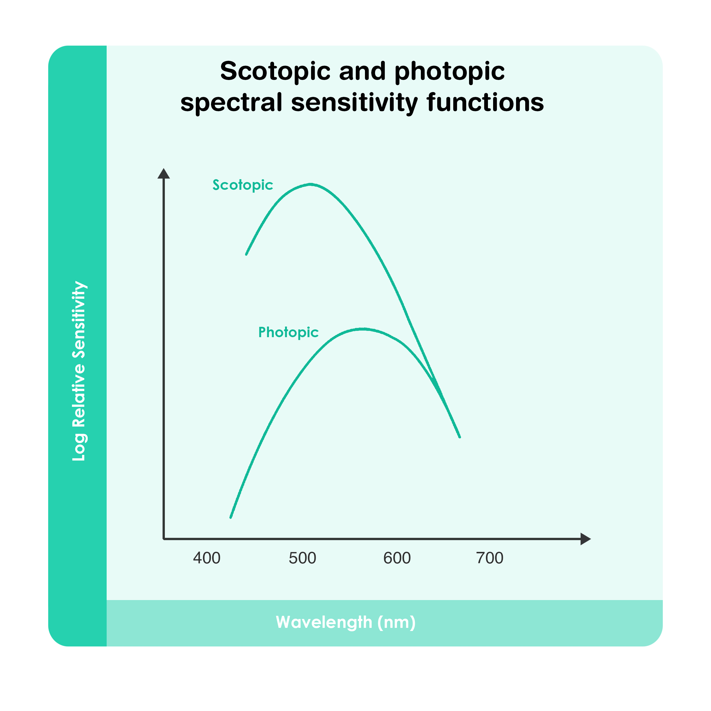 Scotopic and Photopic Spectral Sensitivity Functions