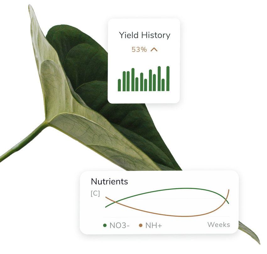 Green leaf plant with statistics overlapping