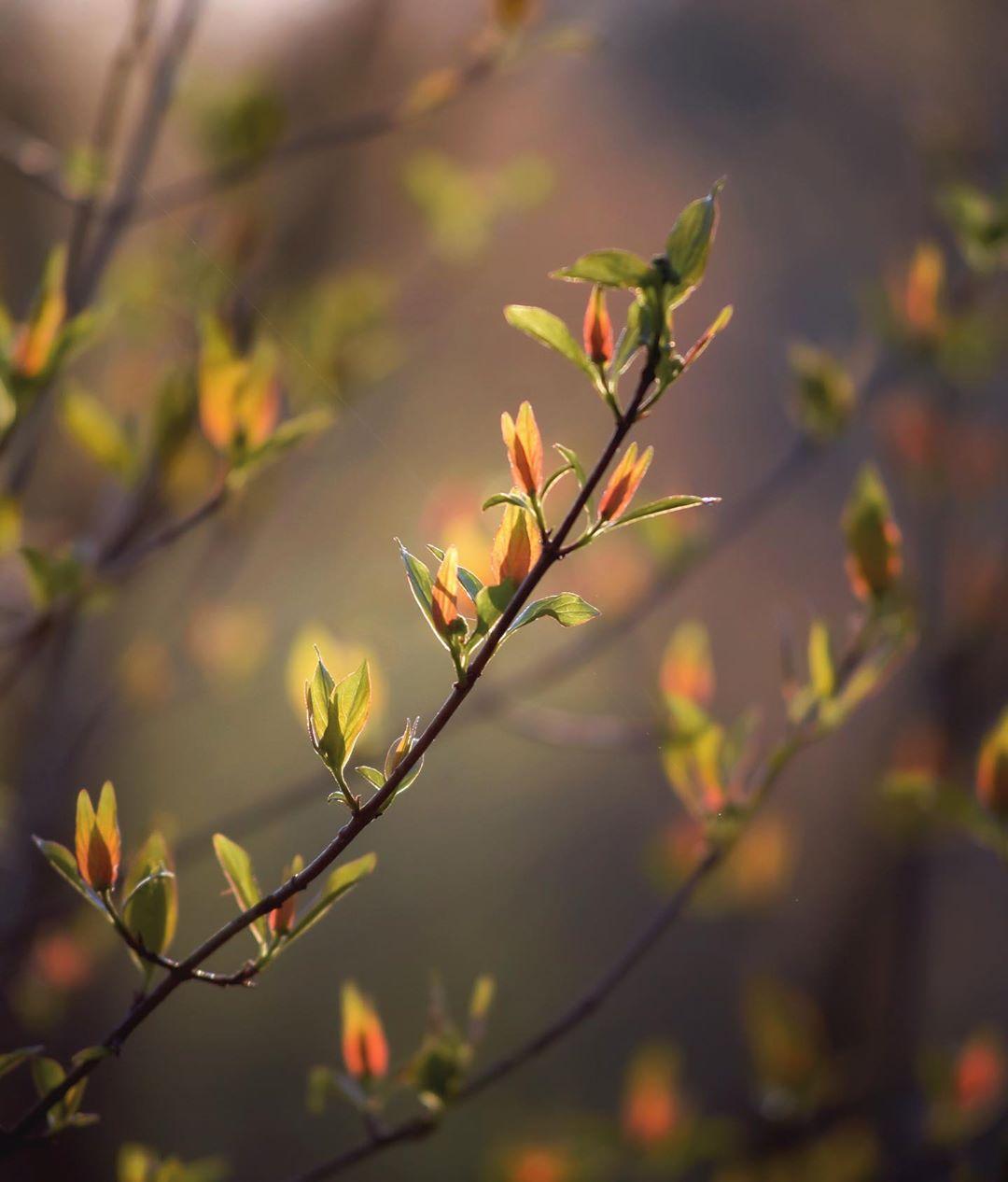 flower, light, inspiring, nature, water, gradient, sunset, serene, stillness