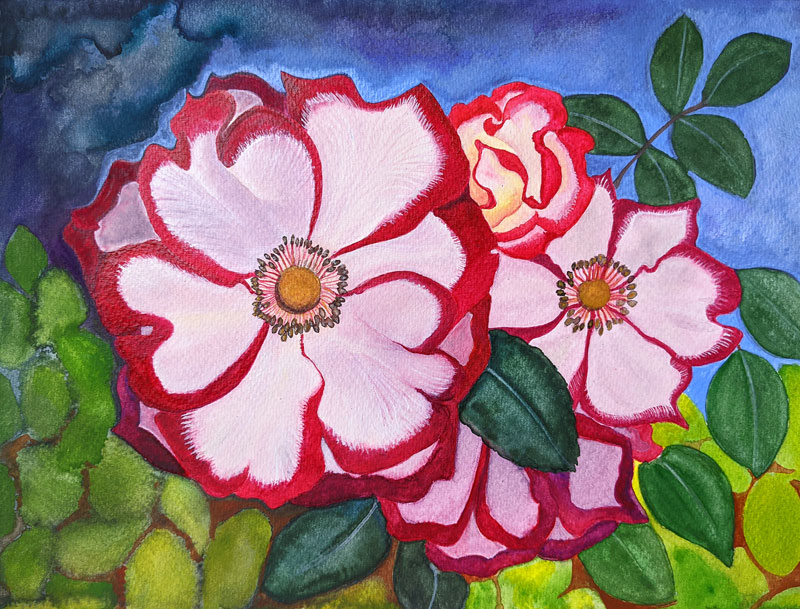 A cluster of wild roses blooming.  Background of green leaves and swirling bluish sky