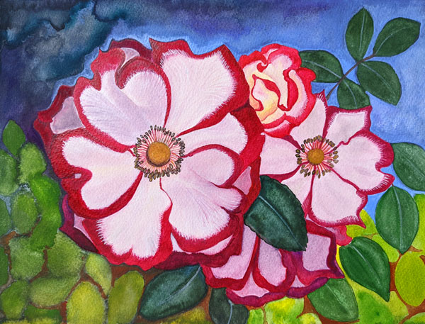 A red and white cluster of roses blooming from green leaves.  The sky is a strange mixture of blues.