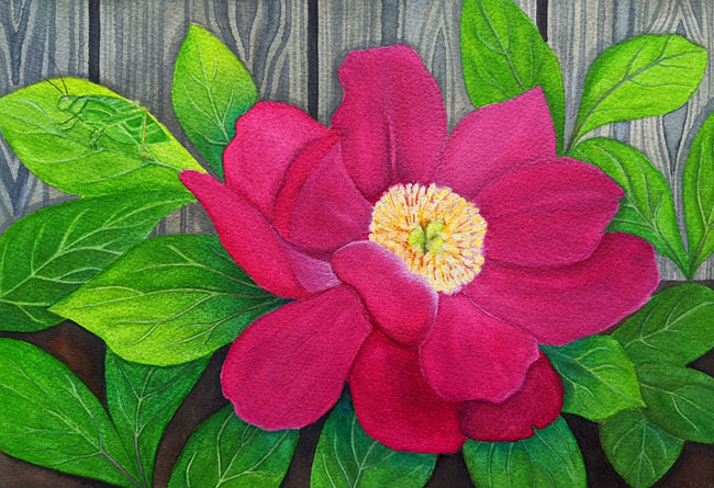 A dark pink peony flower with a yellow center surrounded by leaves and a little katydid.  In front of a grey fence