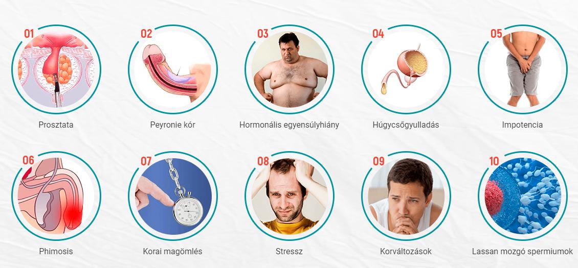 az erekció férfiaknál meghosszabbodik hypothyreosis erekció