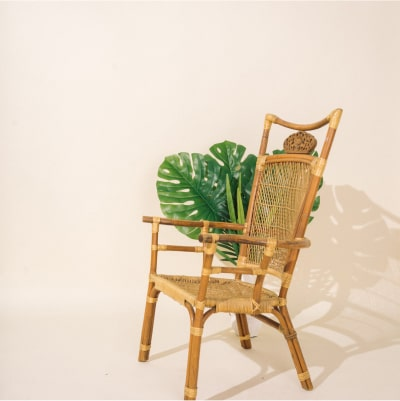 Plant on chair