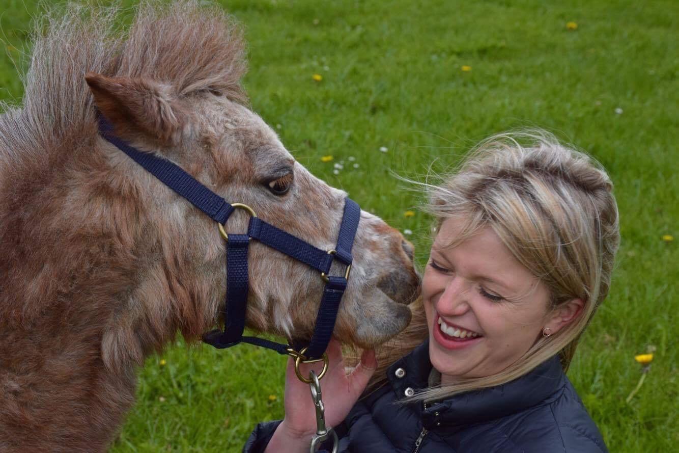 Miniatur heste i Frørup