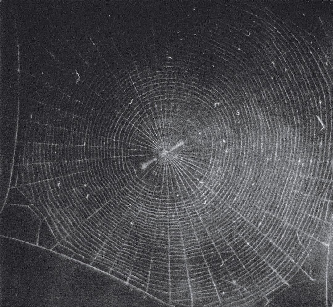 Vija Celmins Web 2