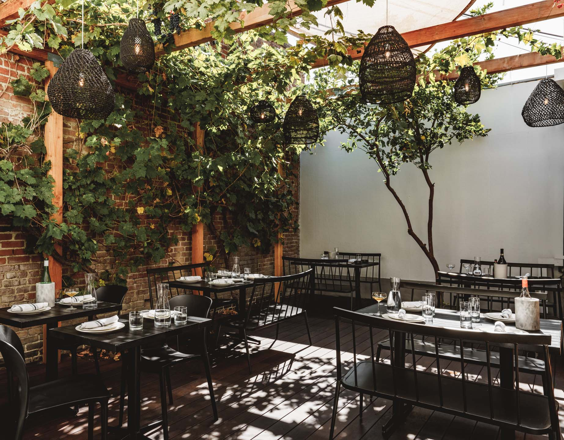 The back patio at Wife and the Somm showing the grapevines, tables and lemon tree.
