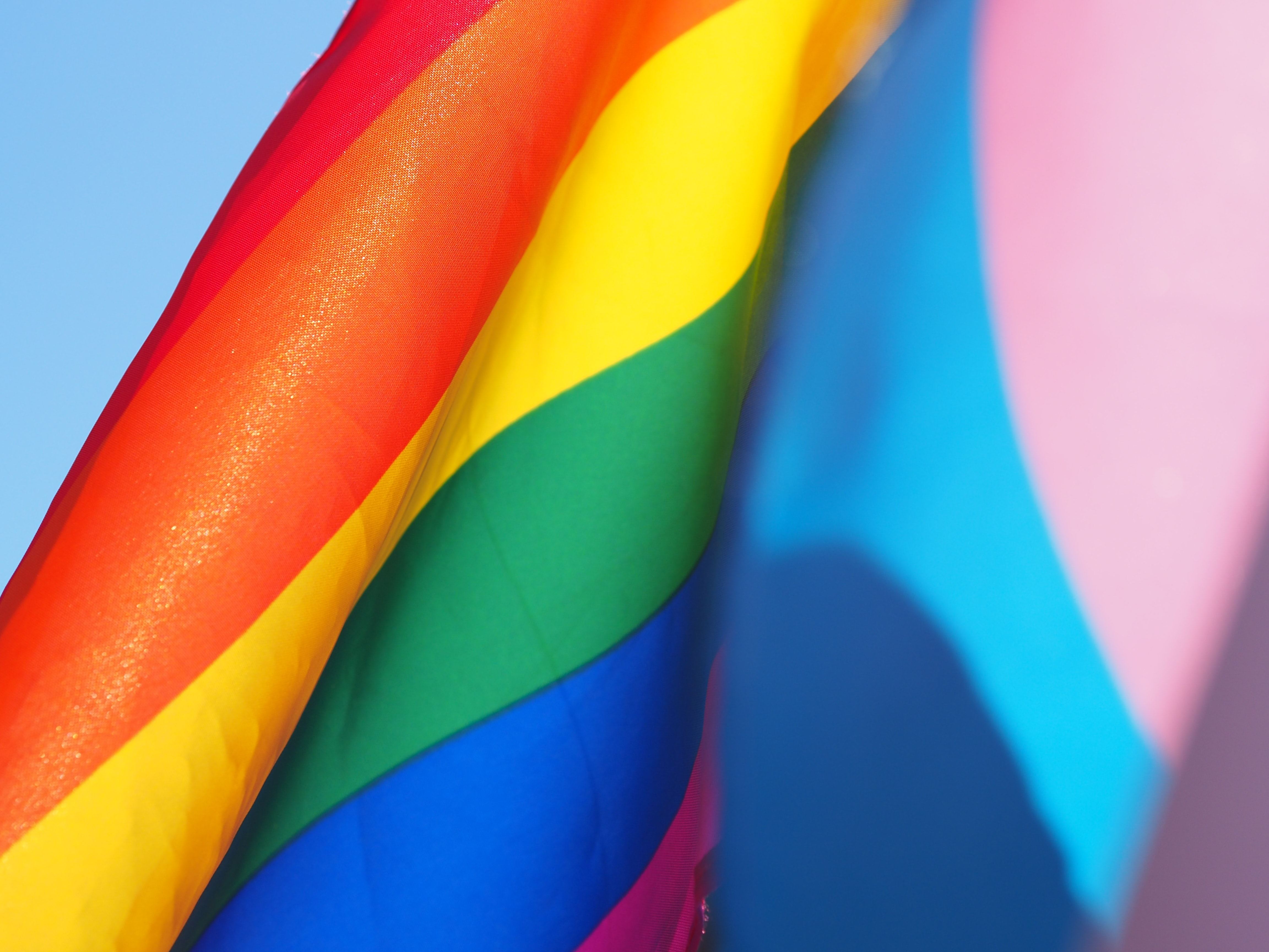 Organizations to Support this Pride Month