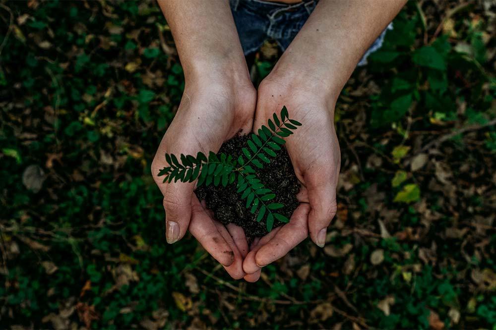 Draufsicht auf eine Pflanze in schalenförmigen Händen über dem Pflanzenbeet
