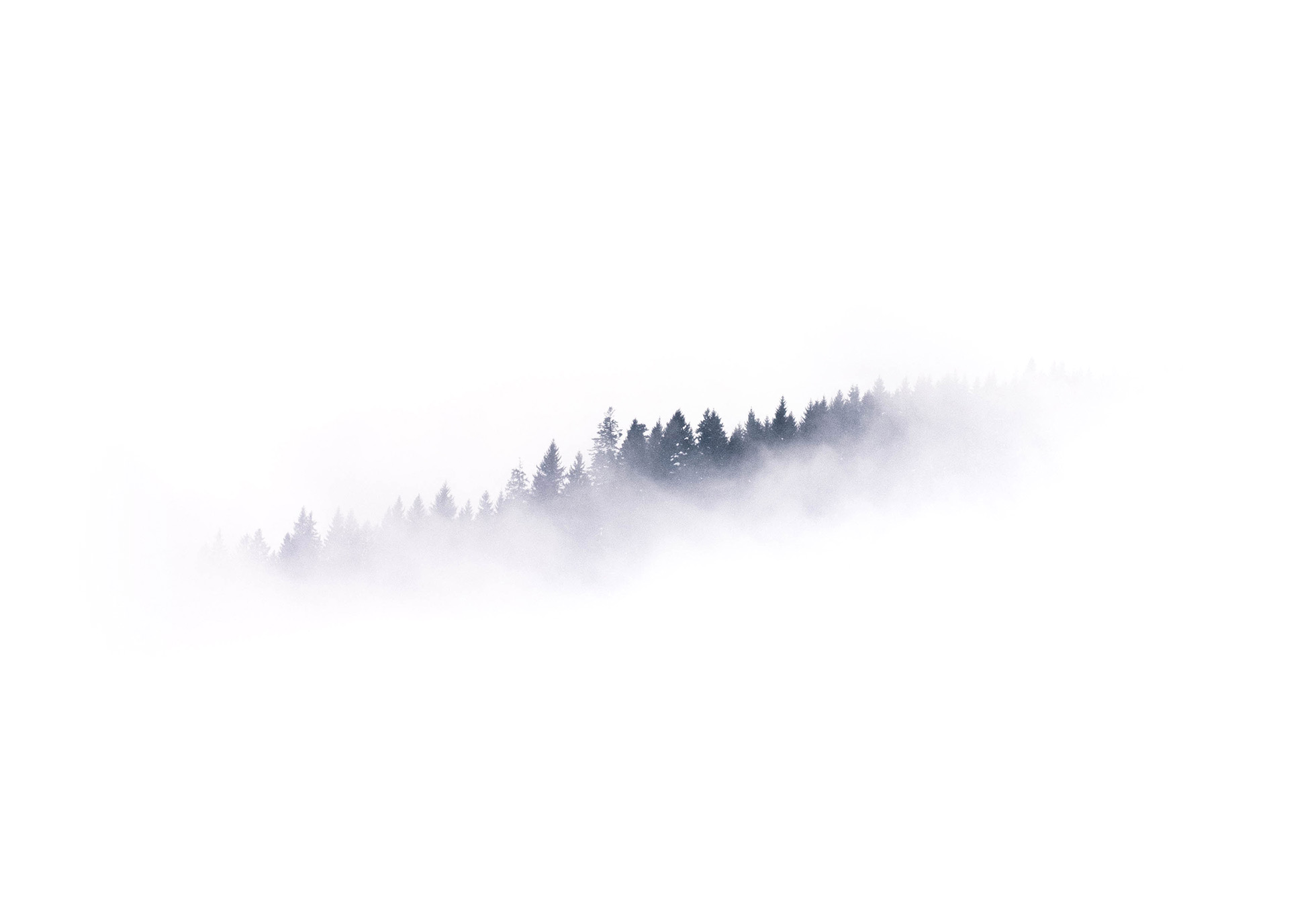 Background image of a foggy forest