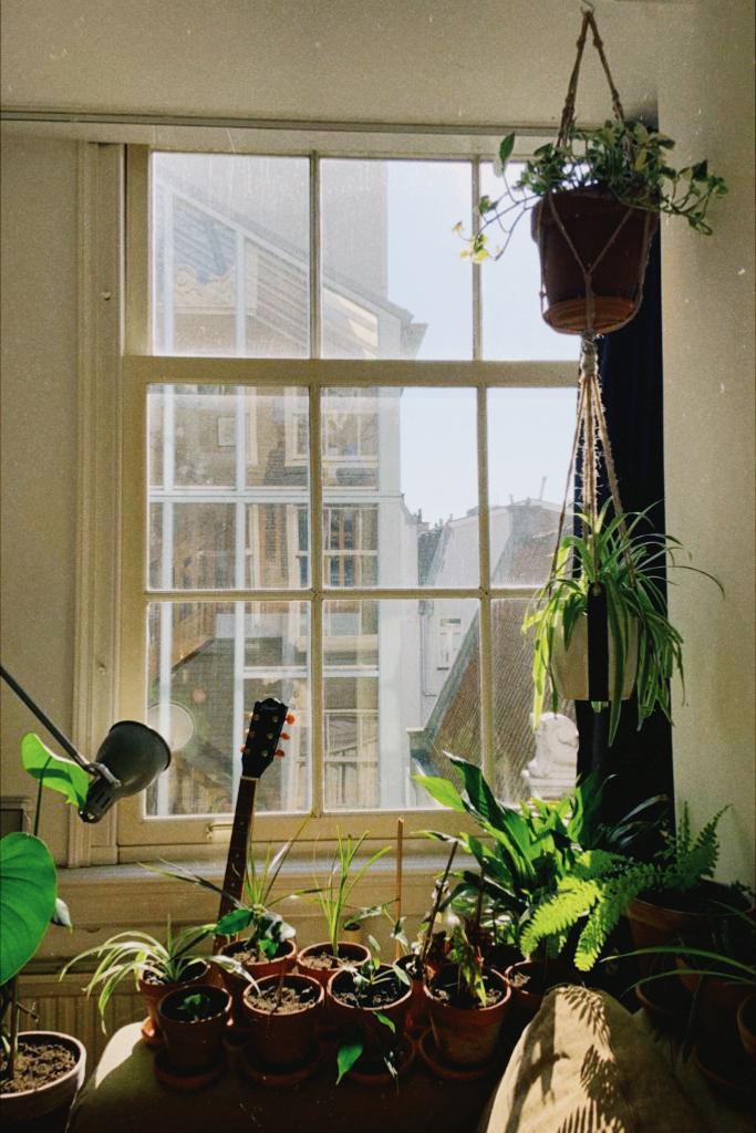 urban jungle houseplants with pots